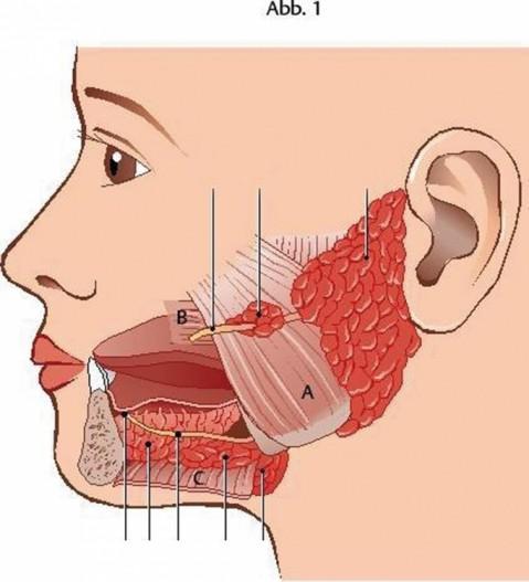 Latexallergie Bilder und Symptome