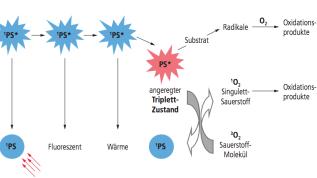 Die Photodynamische und Photothermische Therapie – ein Überblick